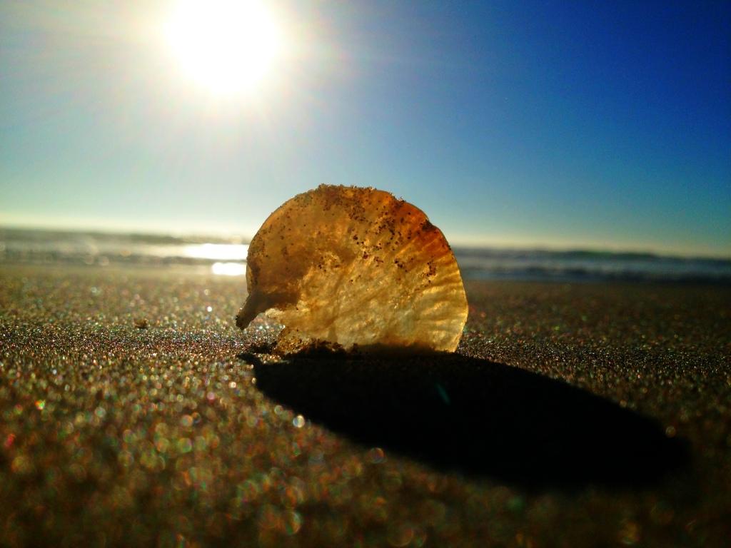 Seashell, seashell...