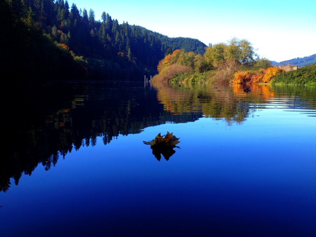 A lone leaf floats down the Siuslaw River...