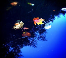 Leaves floated past in a multitude of colors, decorating the water...