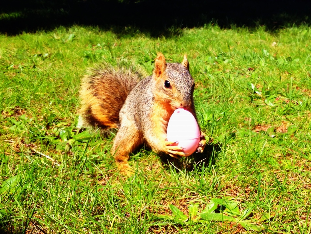 Smells like a peanut, looks like an egg. That's how I like to confuse a squirrel... By Jaklyn Larsen