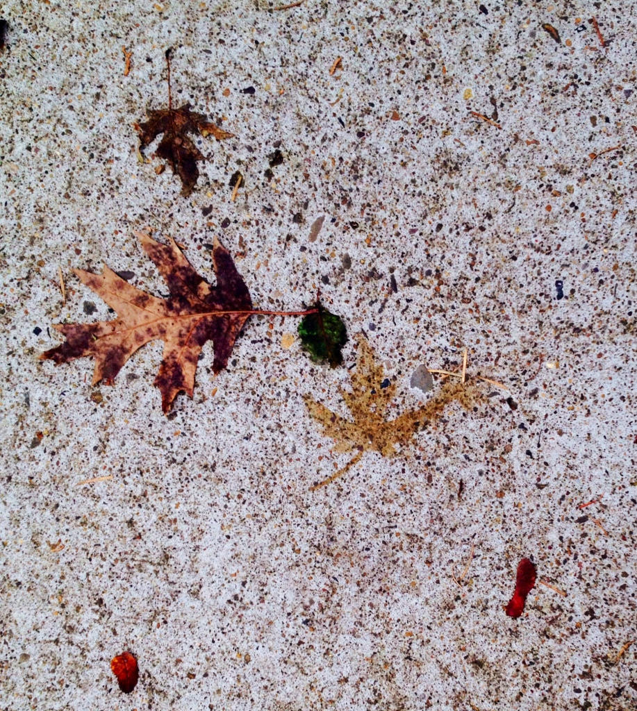 A beautiful leaf print among the scattered leaves on the sidewalk...