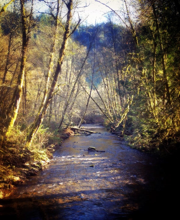 A peaceful moment at Whittaker Creek, photo by Jaklyn Larsen