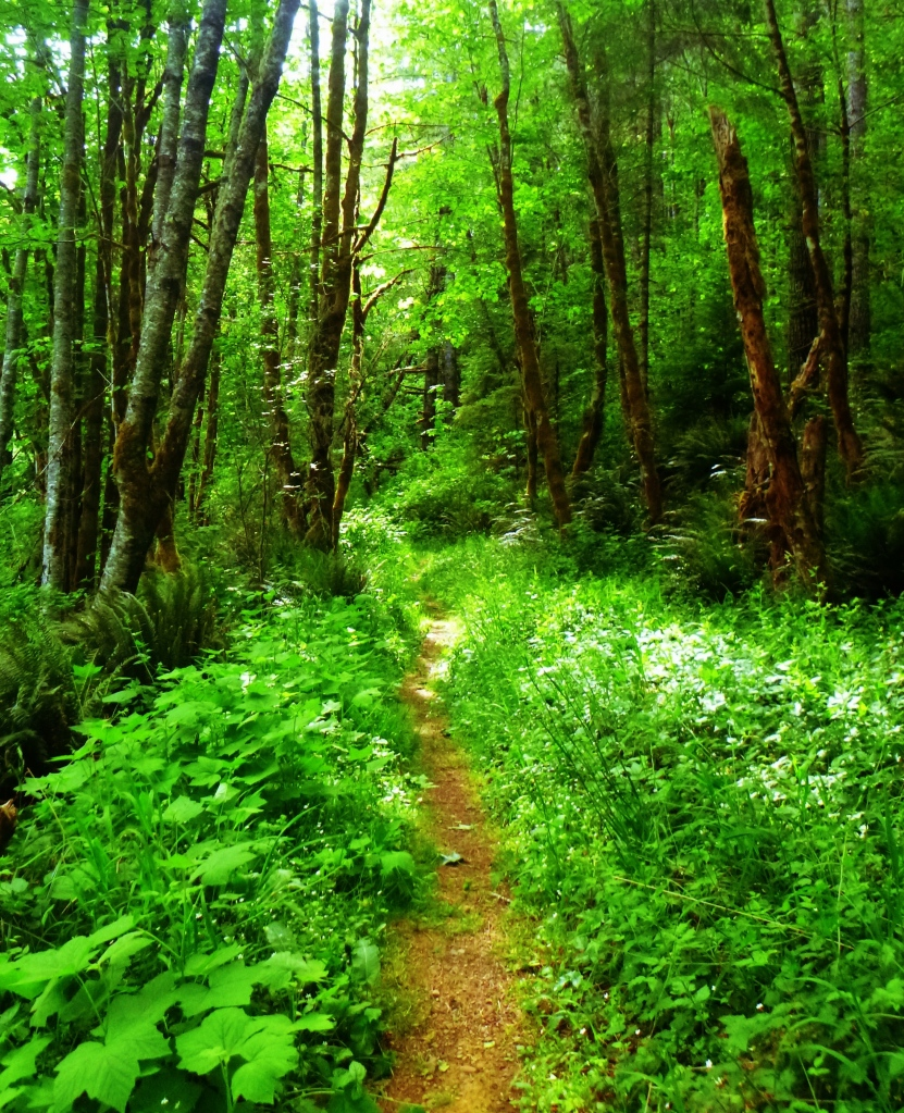 A trail to the unknown, somewhere near Whittaker Creek, Oregon. Photo by Jaklyn Larsen