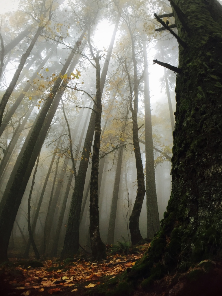 The fog enveloped the forest in a peaceful silence...